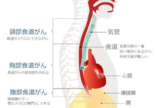 http://gooday.nikkei.co.jp/atcl/report/14/091100023/080900038/zu1.jpg?__scale=w:530,h:363&_sh=0480d20830